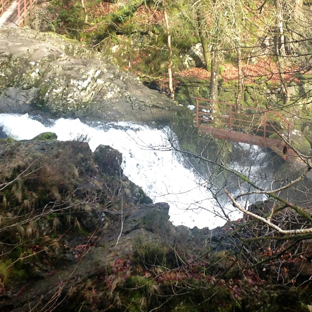 6. Selwith Force